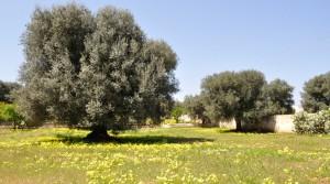 villa-antonietta-masseria-luxury-property-puglia-ostuni-17-300x167